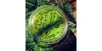 Macerate - Balsam fir
