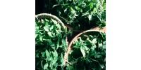Plantes medicinales en vrac