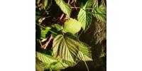 Ateliers d'identification de plantes médicinales autour de la maison ...